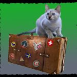 Das Bild zeigt eine Katze sitzend auf einem Reisekoffer.
