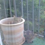 Katze im Tontopf