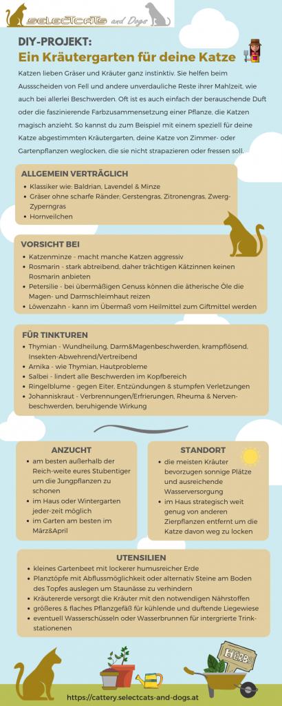 Pinterest Infografik DIY-Kräutergarten