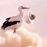 Storch mit Kitten