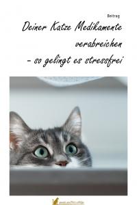Katze Medizin verabreichen Homepage